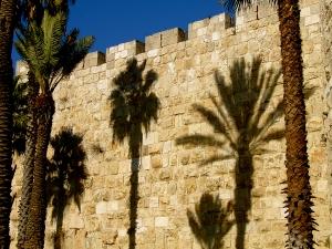 bigstock_Jerusalem_Palm_4084413